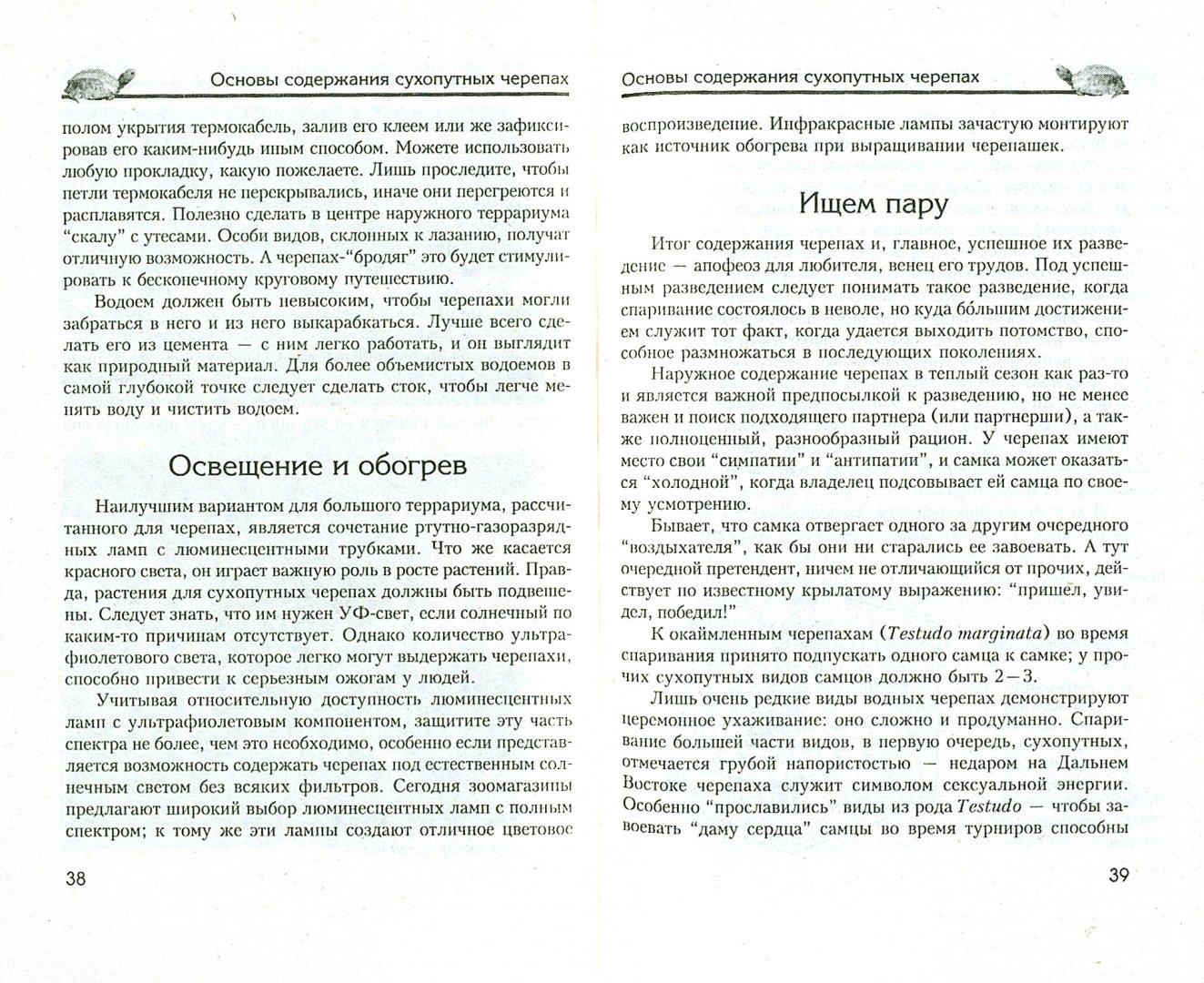 Иллюстрация 1 из 17 для Сухопутные черепахи. Содержание. Разведение. Кормление. Лечение заболеваний - Александр Чегодаев   Лабиринт - книги. Источник: Лабиринт