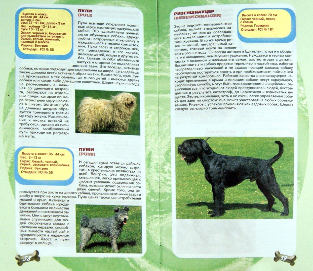Справочник собак в картинках
