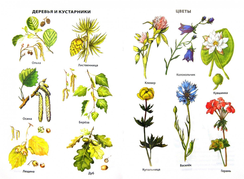 гораздо лесные цветы картинки и названия цветов простым оригинальным