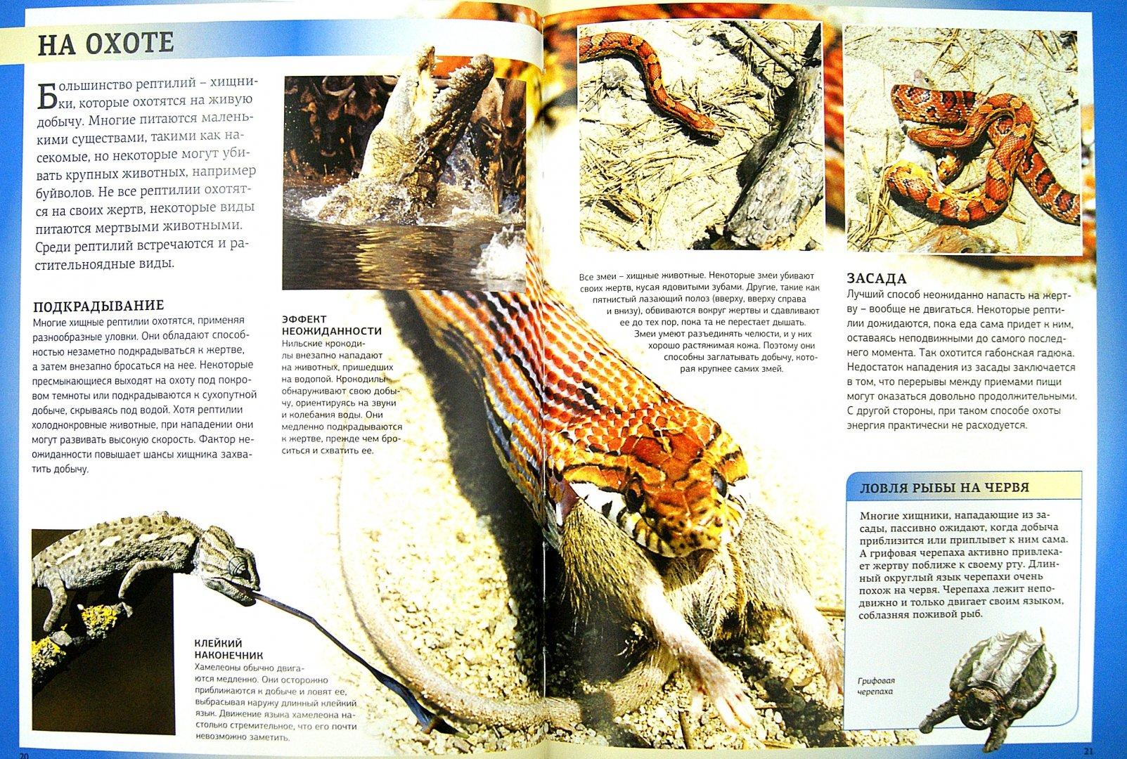 Иллюстрация 1 из 16 для Рептилии. Энциклопедия для школьников - Даниэль Джилпин | Лабиринт - книги. Источник: Лабиринт