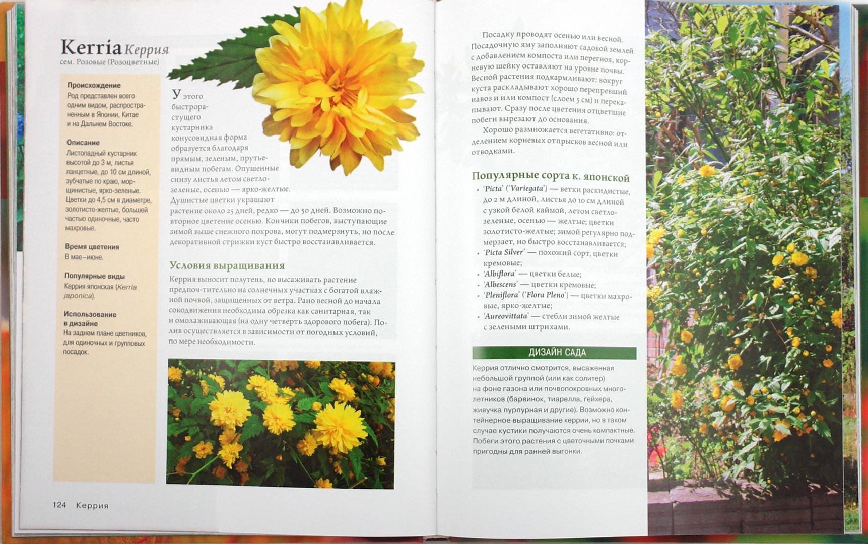 Иллюстрация 1 из 33 для Современное декоративное садоводство. Деревья и кустарники (+CD)   Лабиринт - книги. Источник: Лабиринт
