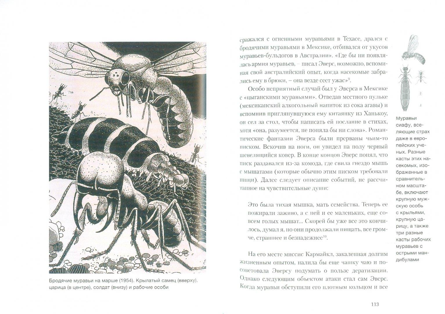 Иллюстрация 1 из 10 для Муравей - Шарлотта Слей   Лабиринт - книги. Источник: Лабиринт
