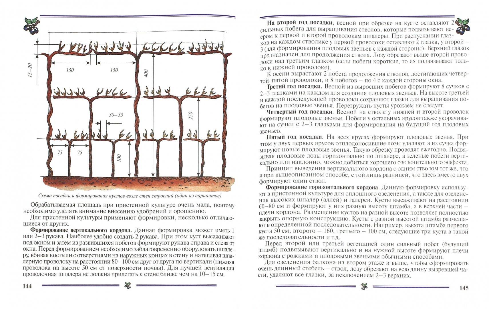 Иллюстрация 1 из 29 для Виноград на приусадебном участке. Пособие для садоводов-любителей - Раджабов, Зармаев   Лабиринт - книги. Источник: Лабиринт