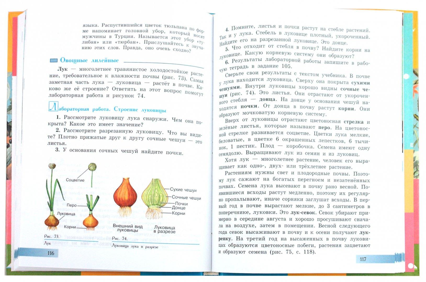 Иллюстрация 1 из 7 для Биология. Растения. Бактерии. Грибы. 7 класс. Учебник, реализующий адапт. общеобразоват. программы - Зоя Клепинина | Лабиринт - книги. Источник: Лабиринт