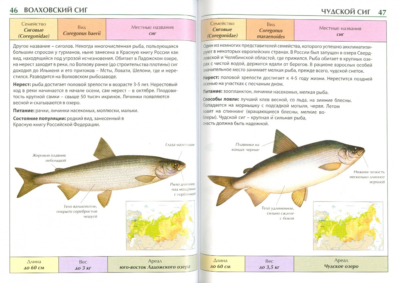 Энциклопедия рыбы россии в картинках