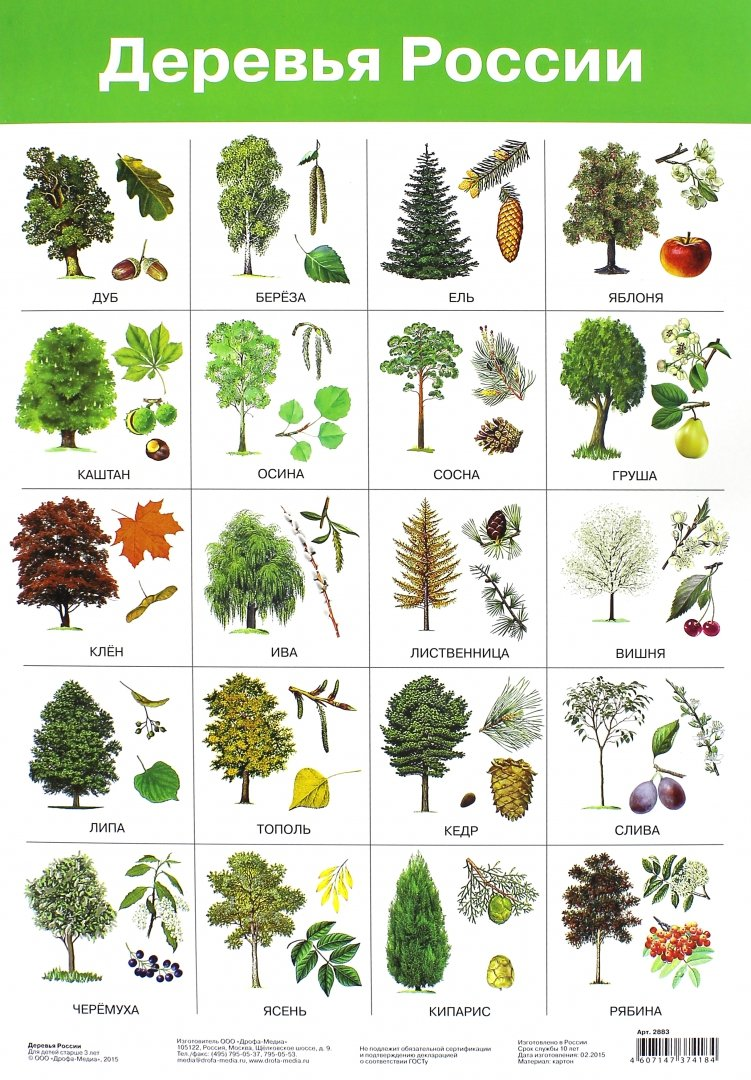 Название деревьев по картинке