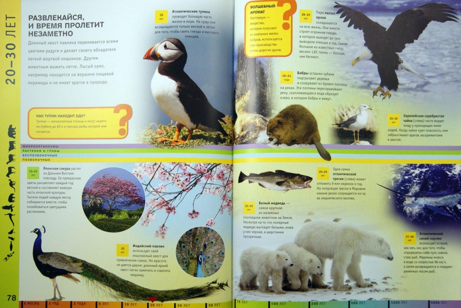 Иллюстрация 1 из 6 для Жизнь на Земле. Для детей от 9 лет - Грэм Бейнз | Лабиринт - книги. Источник: Лабиринт