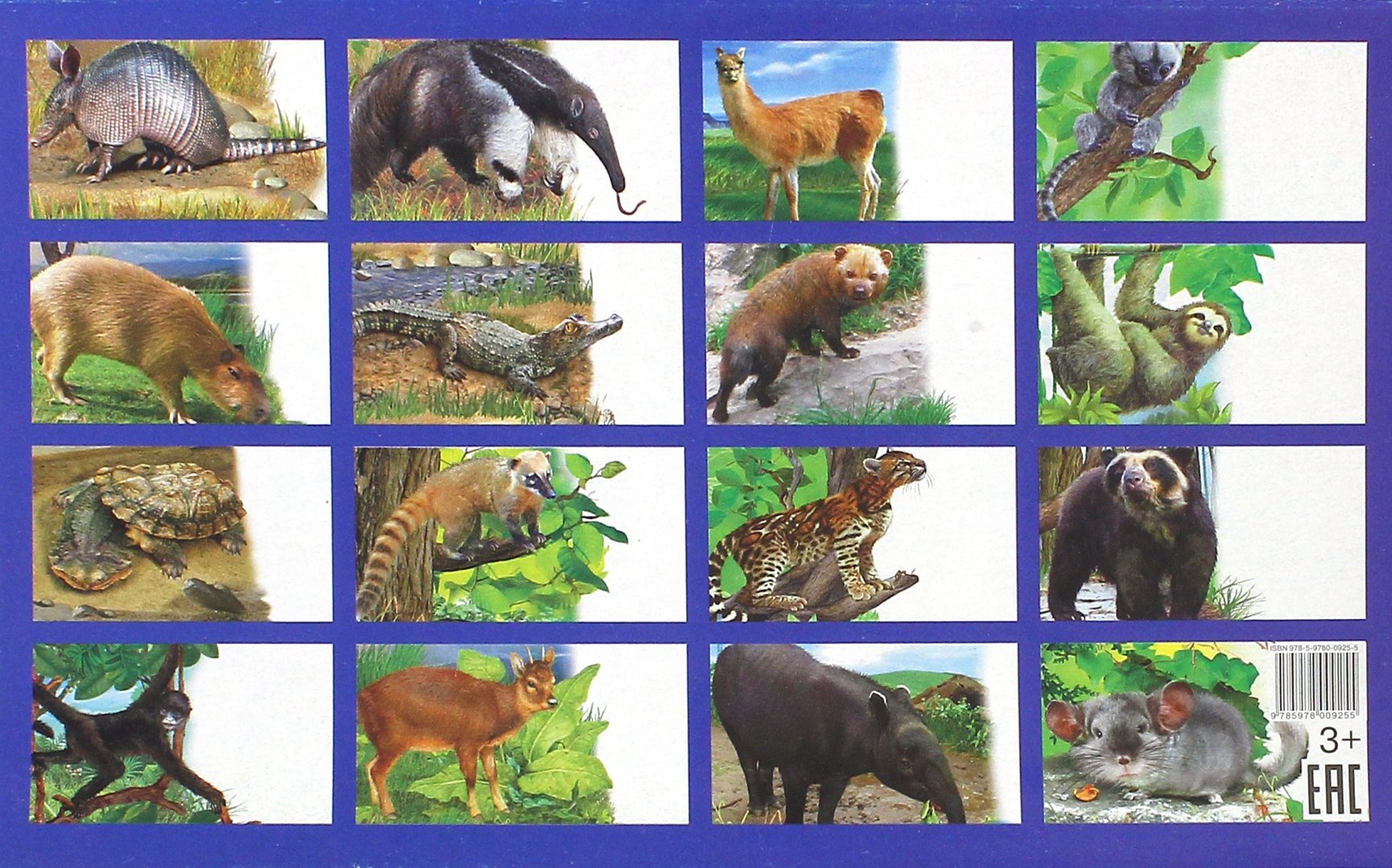 крыши большими животные южной америки фото с названиями истории про