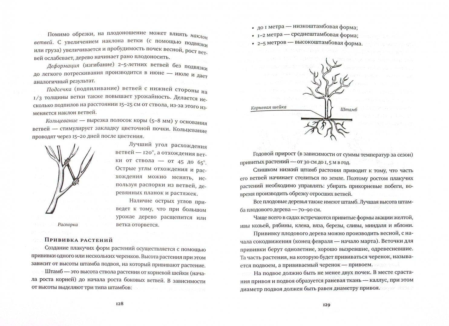 Иллюстрация 1 из 11 для Пособие по оформлению садового участка для непрофессионалов - Татьяна Рубис   Лабиринт - книги. Источник: Лабиринт