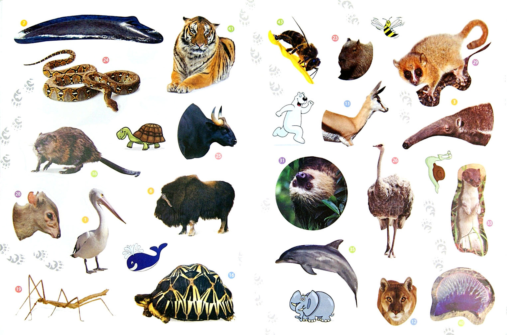 добиться хорошего рекорды животных с картинками тебе