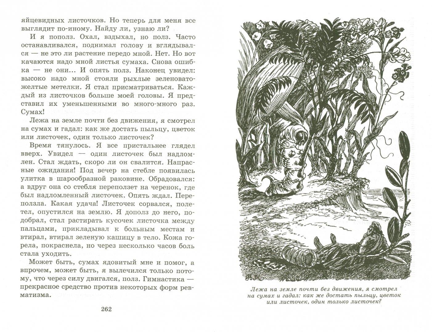Иллюстрация 1 из 23 для В стране дремучих трав - Владимир Брагин | Лабиринт - книги. Источник: Лабиринт
