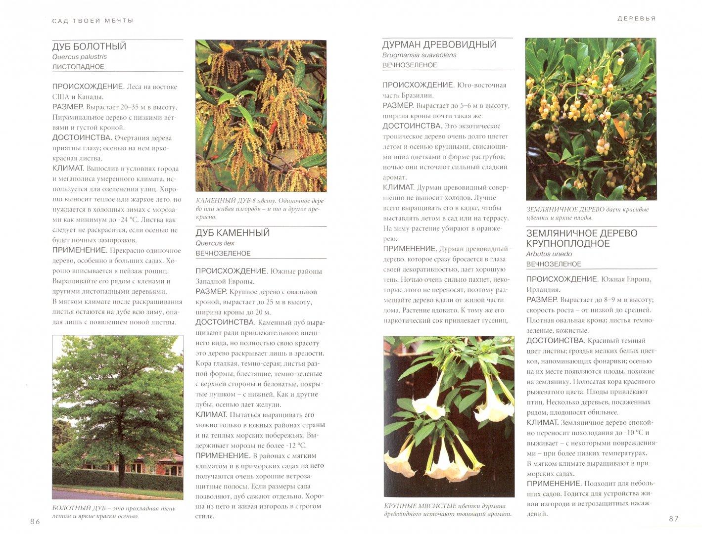 Иллюстрация 1 из 9 для Сад твоей мечты. Советы по планировке, посадке и уходу - Берни, Тугуд | Лабиринт - книги. Источник: Лабиринт