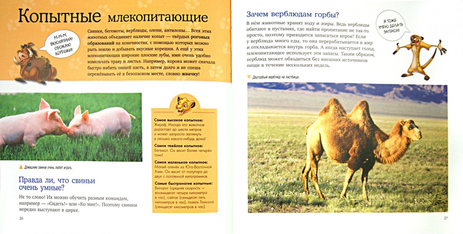 Иллюстрация 1 из 22 для Млекопитающие. Удивительная энциклопедия животных | Лабиринт - книги. Источник: Лабиринт