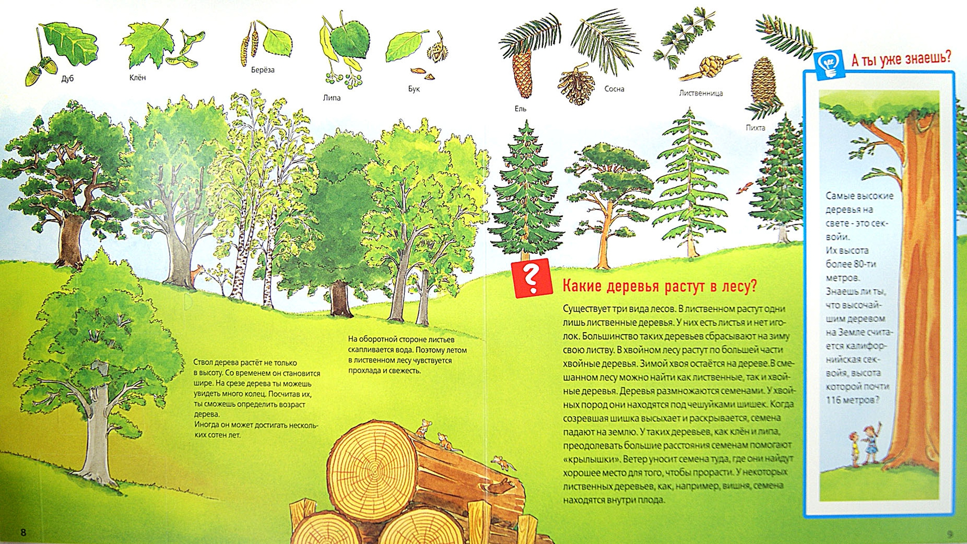 Иллюстрация 1 из 53 для Животные в лесу - Штаубер, Германн   Лабиринт - книги. Источник: Лабиринт