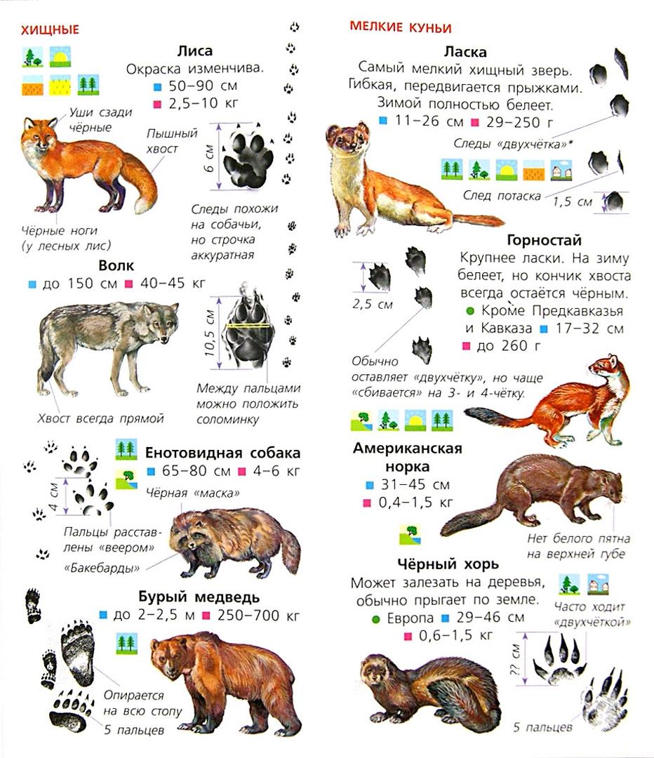 Иллюстрация 1 из 18 для Животные. Определитель для малышей | Лабиринт - книги. Источник: Лабиринт