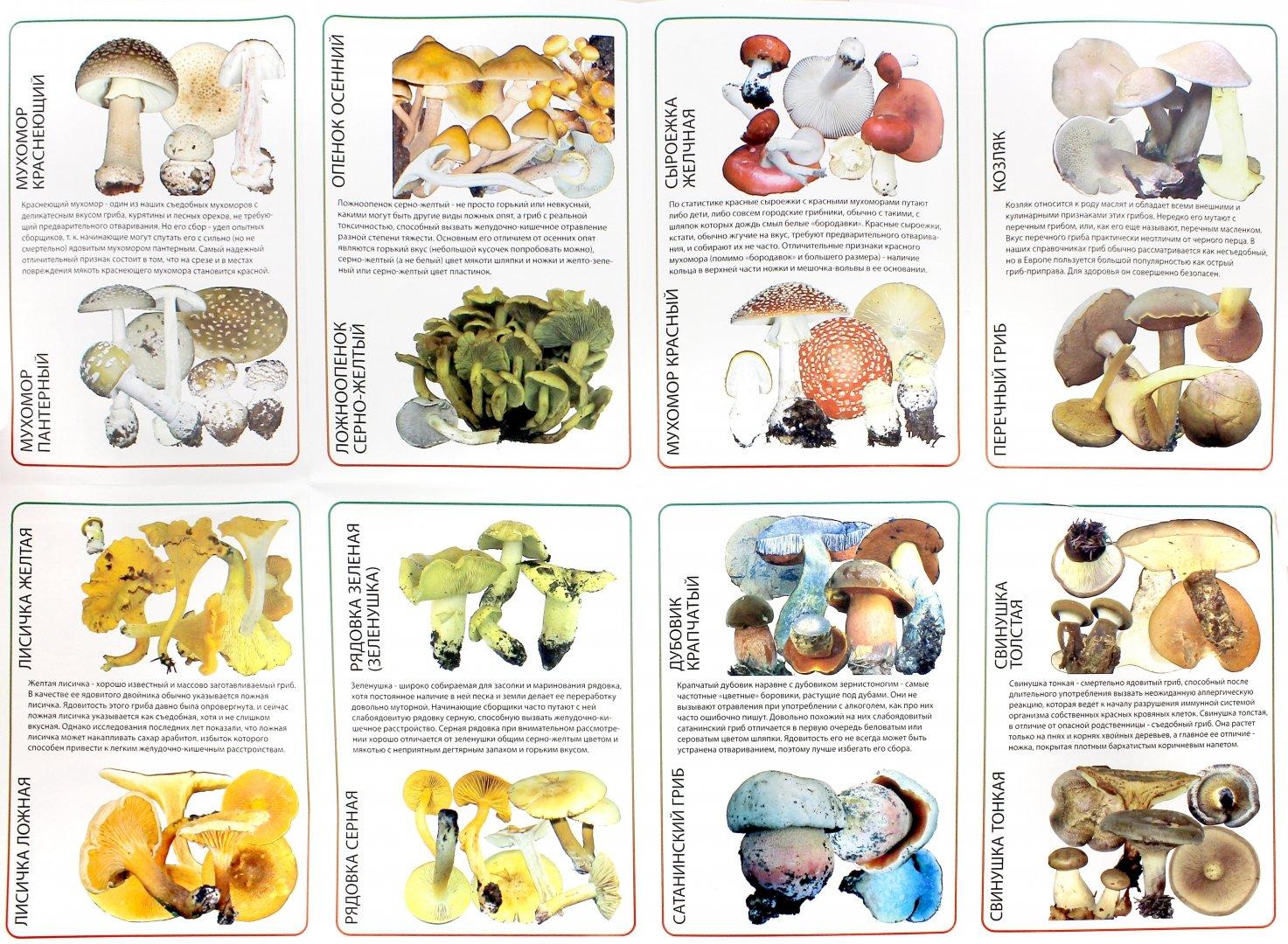 Фотографии съедобных грибов в ростовской области зал