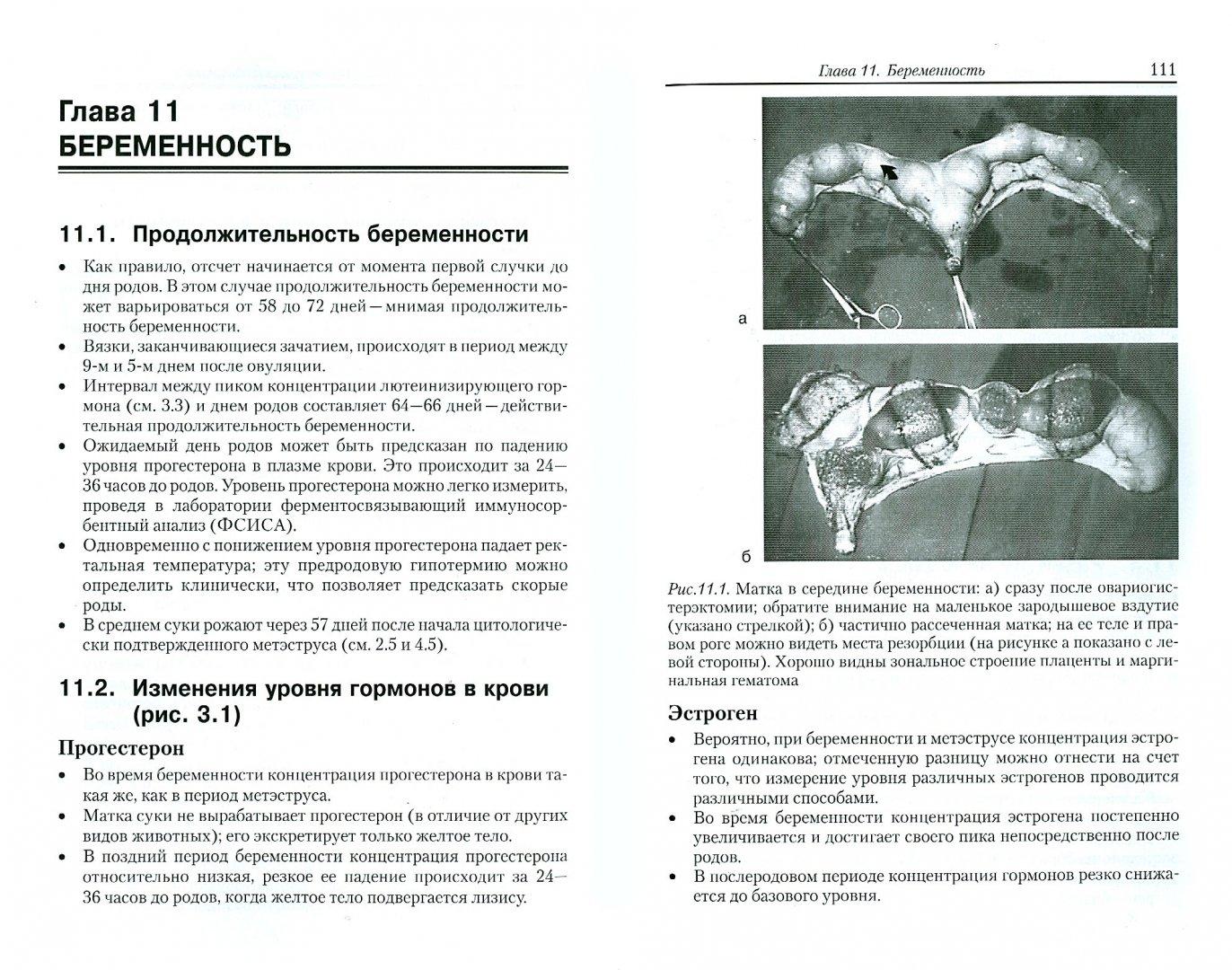 Иллюстрация 1 из 7 для Акушерство и гинекология собак - Гэри Инглэнд | Лабиринт - книги. Источник: Лабиринт