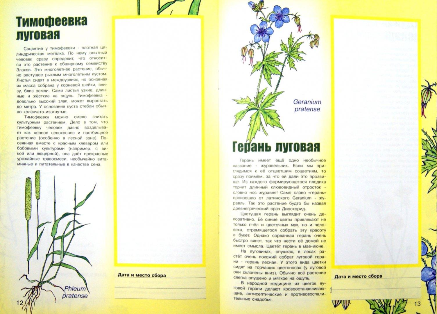 Иллюстрация 1 из 11 для Луговые цветы и травы | Лабиринт - книги. Источник: Лабиринт