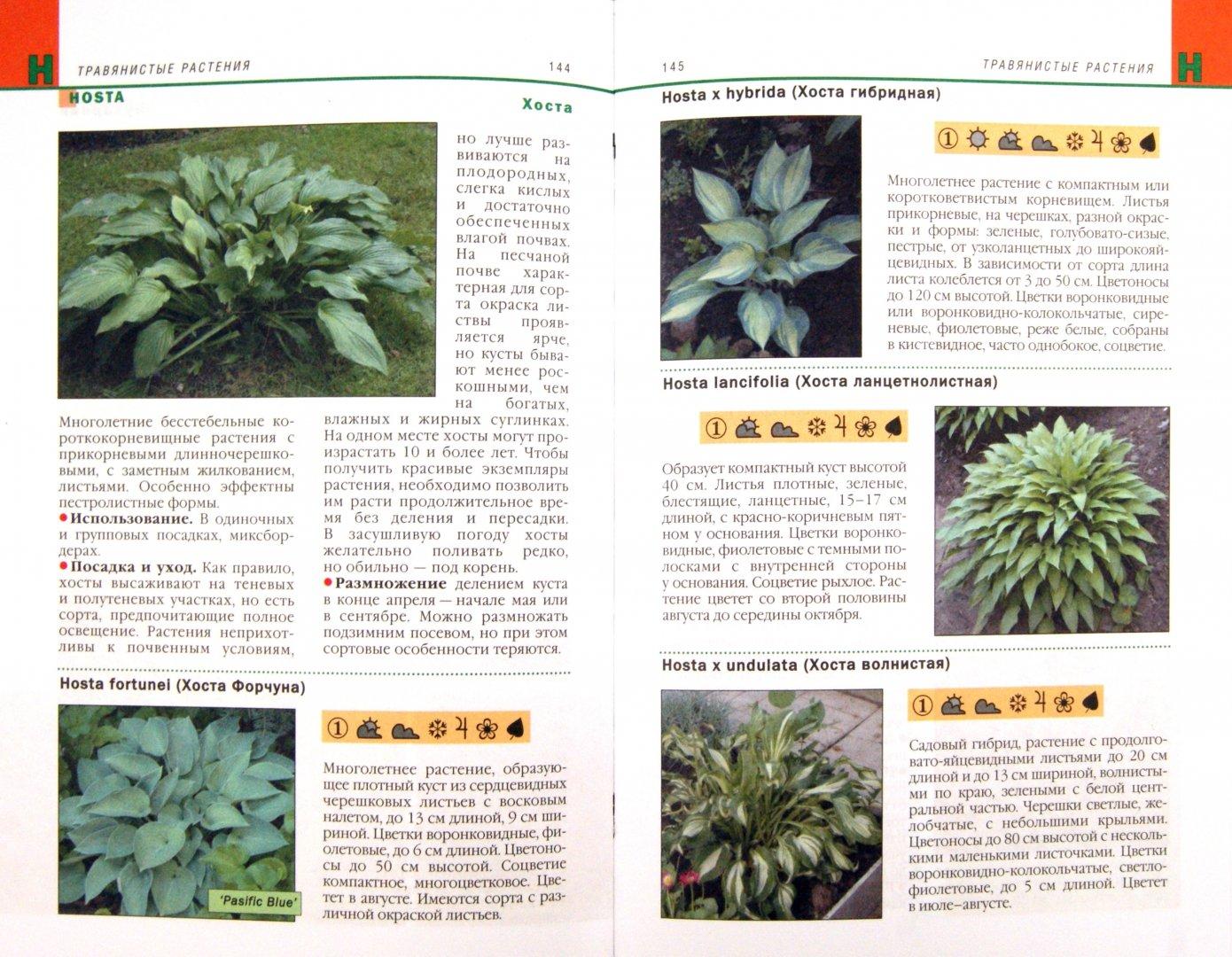 Иллюстрация 1 из 7 для Садовые растения. Справочник дачника | Лабиринт - книги. Источник: Лабиринт