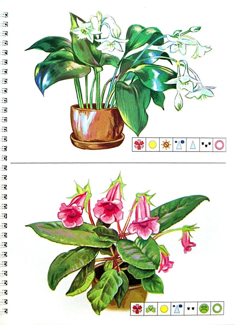 картинки комнатных цветов с названиями для подготовительной группы работы