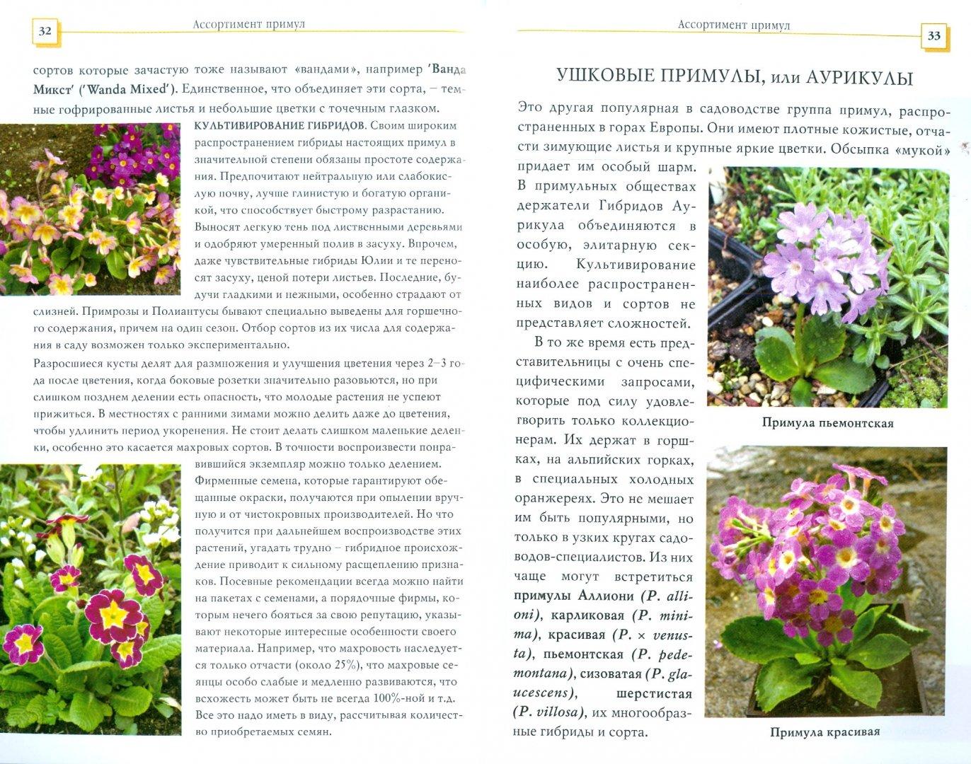 Иллюстрация 1 из 2 для Примулы - Коновалова, Шевырева | Лабиринт - книги. Источник: Лабиринт