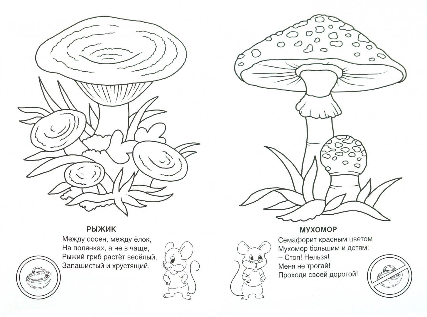 Грибы картинки для детей с названиями раскраска