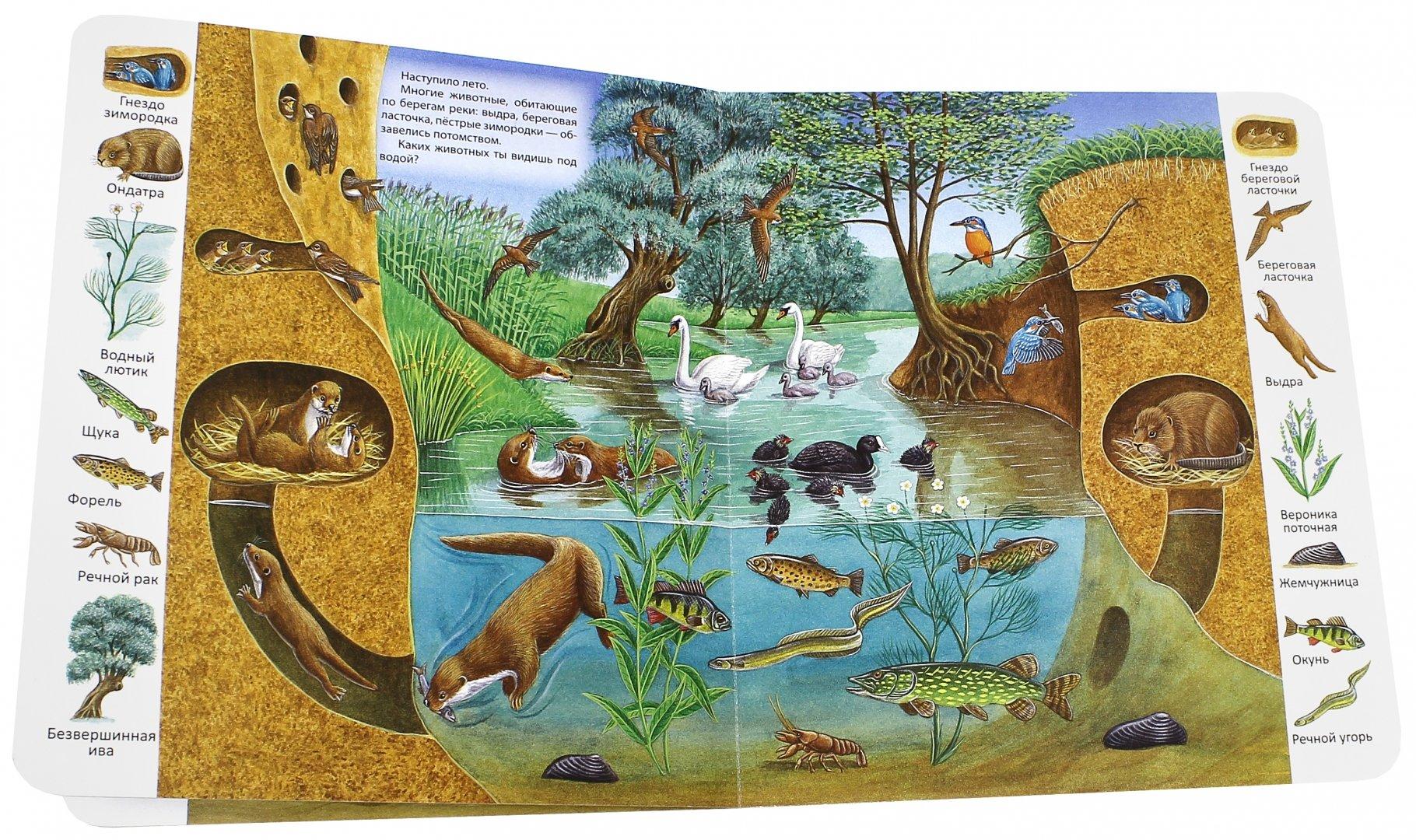 картинки экосистем для доу потом, шашлыки