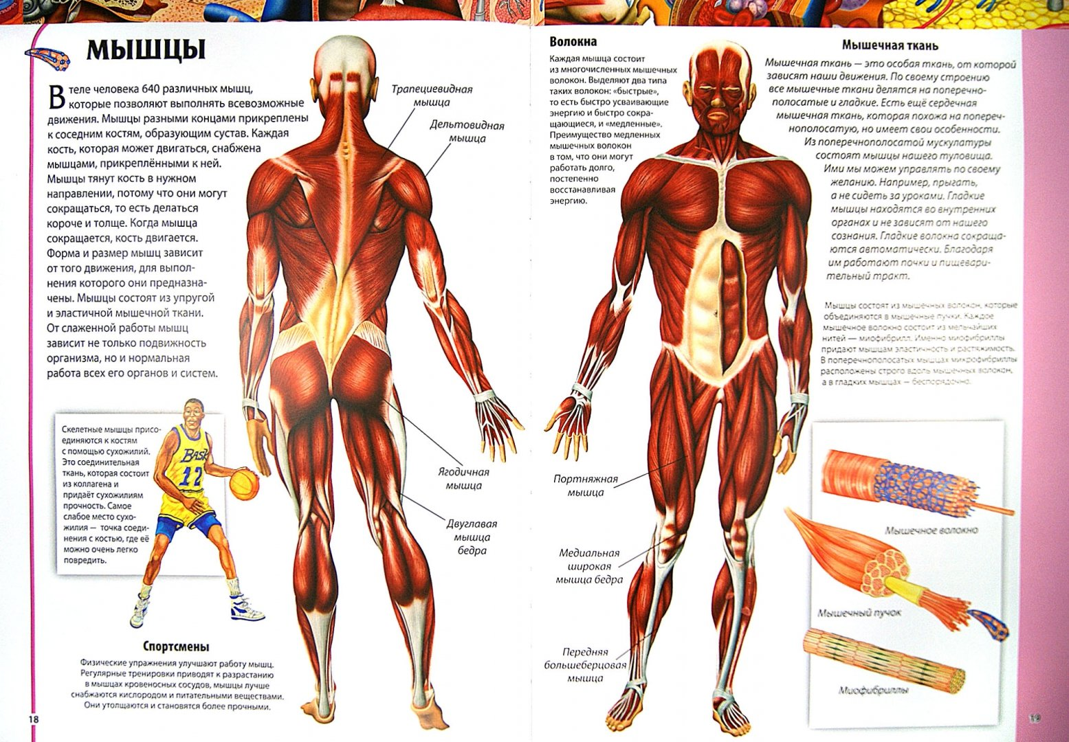 Иллюстрация 1 из 52 для Детский атлас анатомии - Винченцо Гуиди   Лабиринт - книги. Источник: Лабиринт