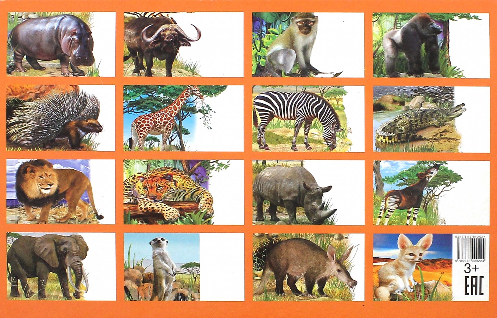 Картинки кто живет в африке из животных