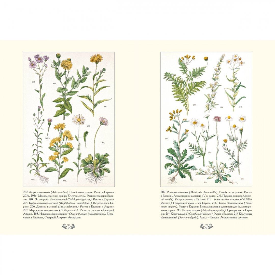 всего атлас травянистых цветов картинки сборок
