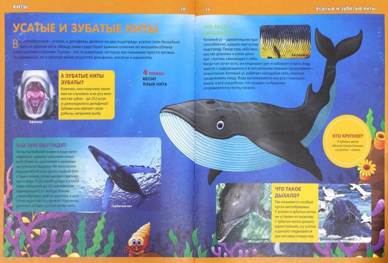 Голубой кит Слон Язык животных, кит, морские млекопитающие ... | 540x796