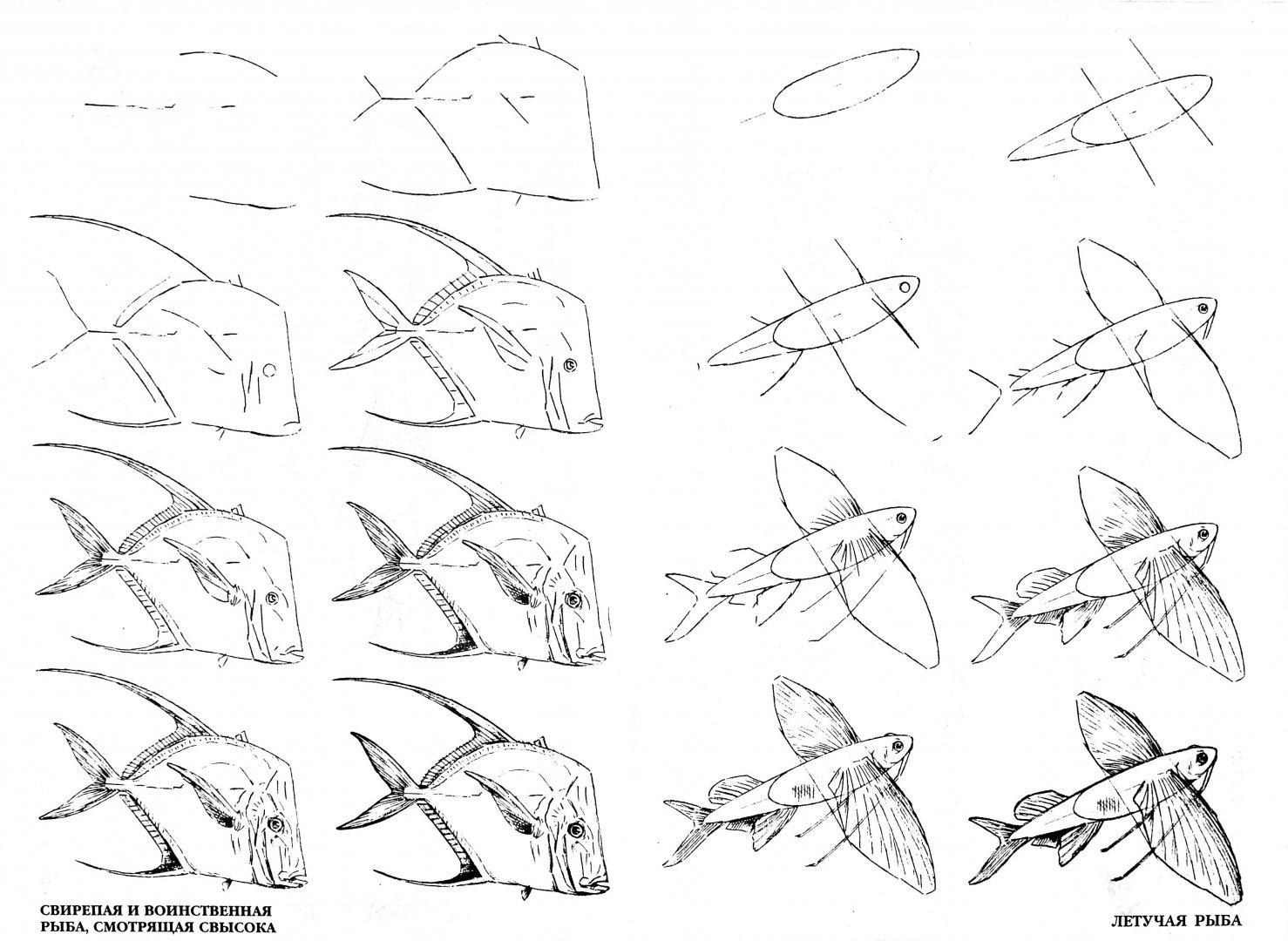 Иллюстрация 1 из 29 для Рисуем 50 акул, китов и других морских животных - Эймис, Бадд | Лабиринт - книги. Источник: Лабиринт