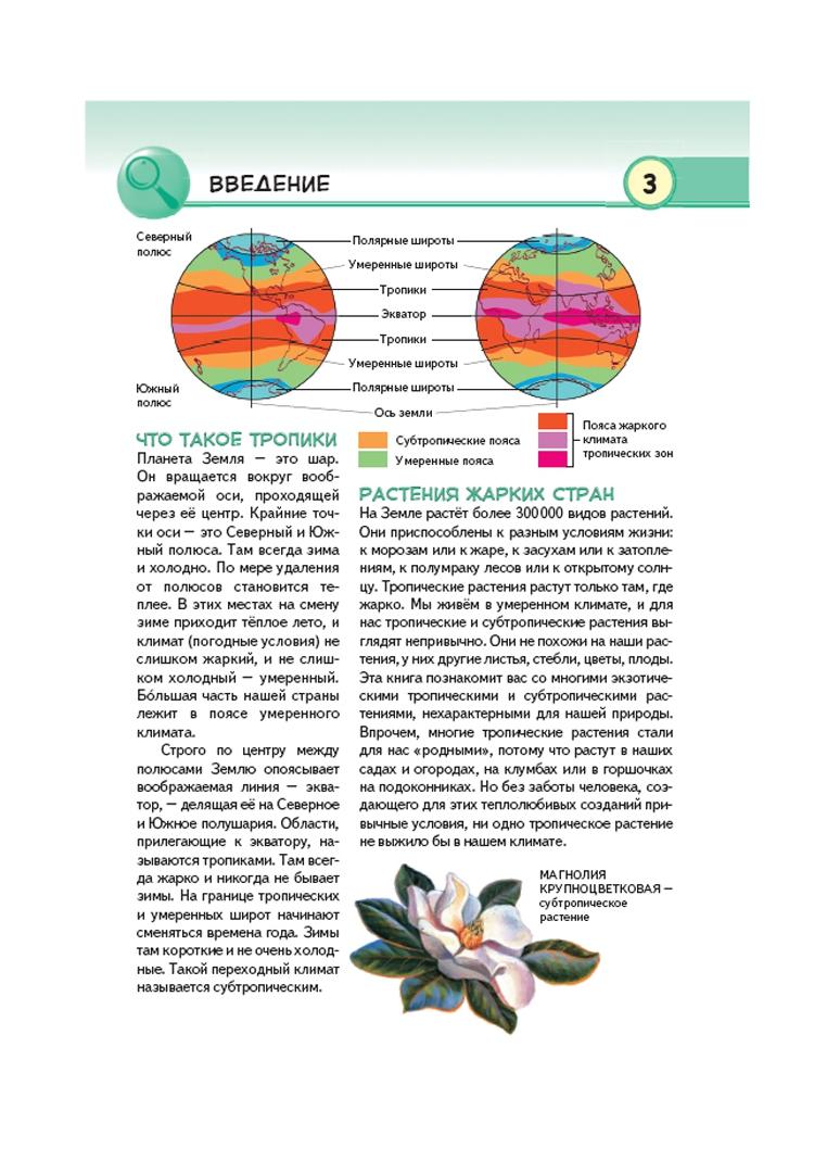 Иллюстрация 1 из 26 для Тропические растения. Удивительная флора жарких стран - Юлия Школьник | Лабиринт - книги. Источник: Лабиринт