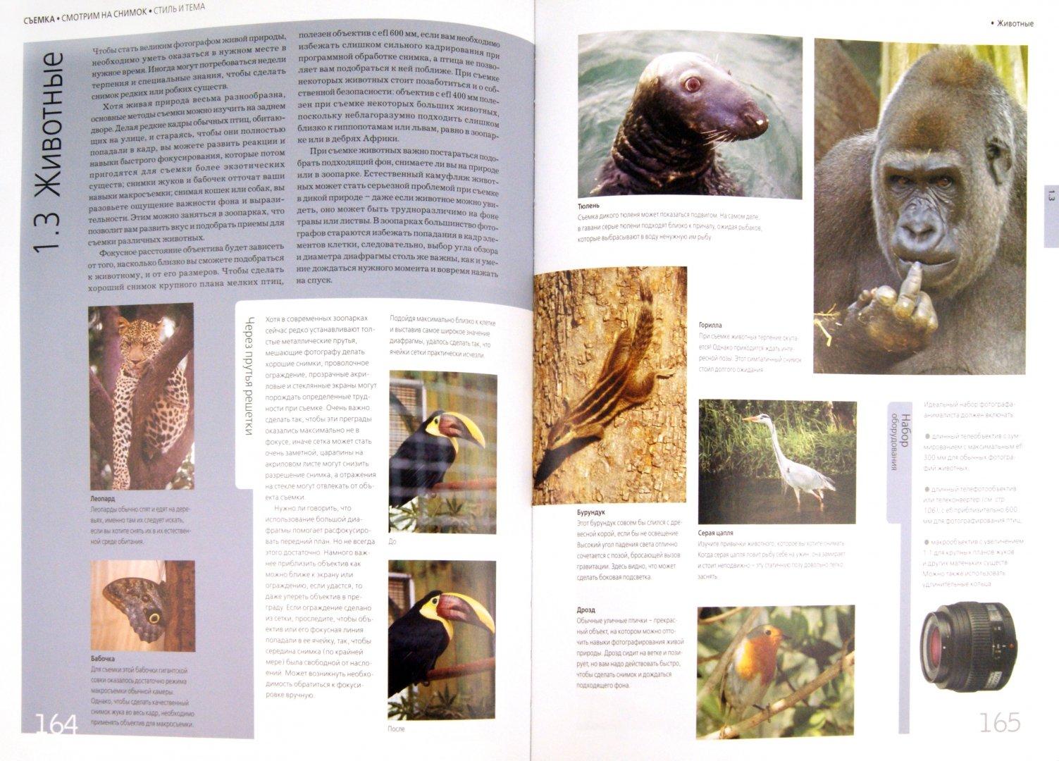 Иллюстрация 1 из 33 для Библия цифровой фотографии - Крис Джордж   Лабиринт - книги. Источник: Лабиринт