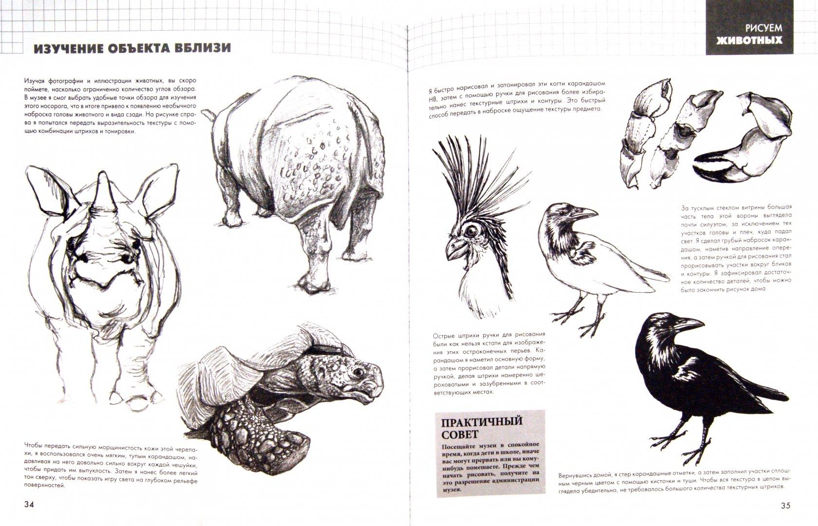 Иллюстрация 1 из 30 для Рисуем животных - Питер Грей | Лабиринт - книги. Источник: Лабиринт