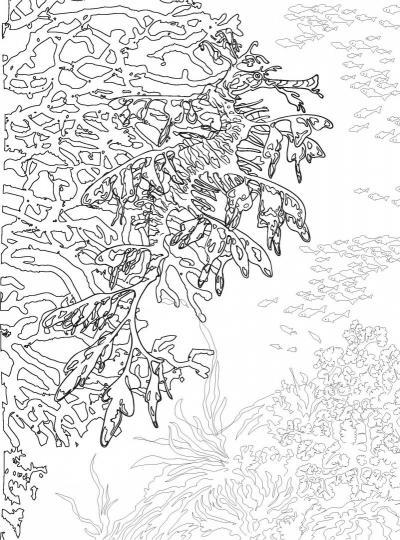 коралловый риф раскраска антистресс