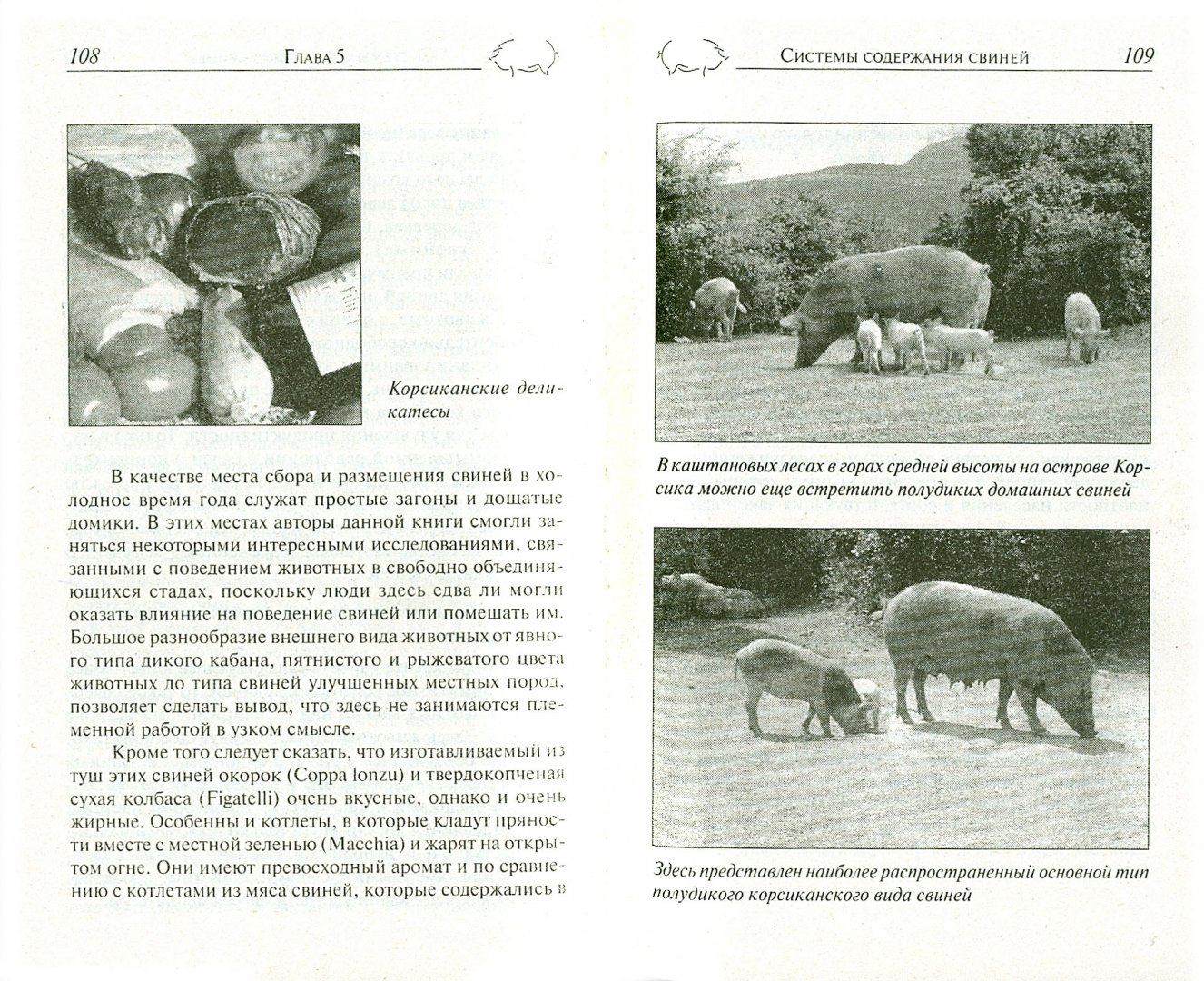 Иллюстрация 1 из 8 для Свиньи в личном хозяйстве. Выбор породы, содержание, разведение, профилактика заболеваний - Пайтц, Пайтц | Лабиринт - книги. Источник: Лабиринт