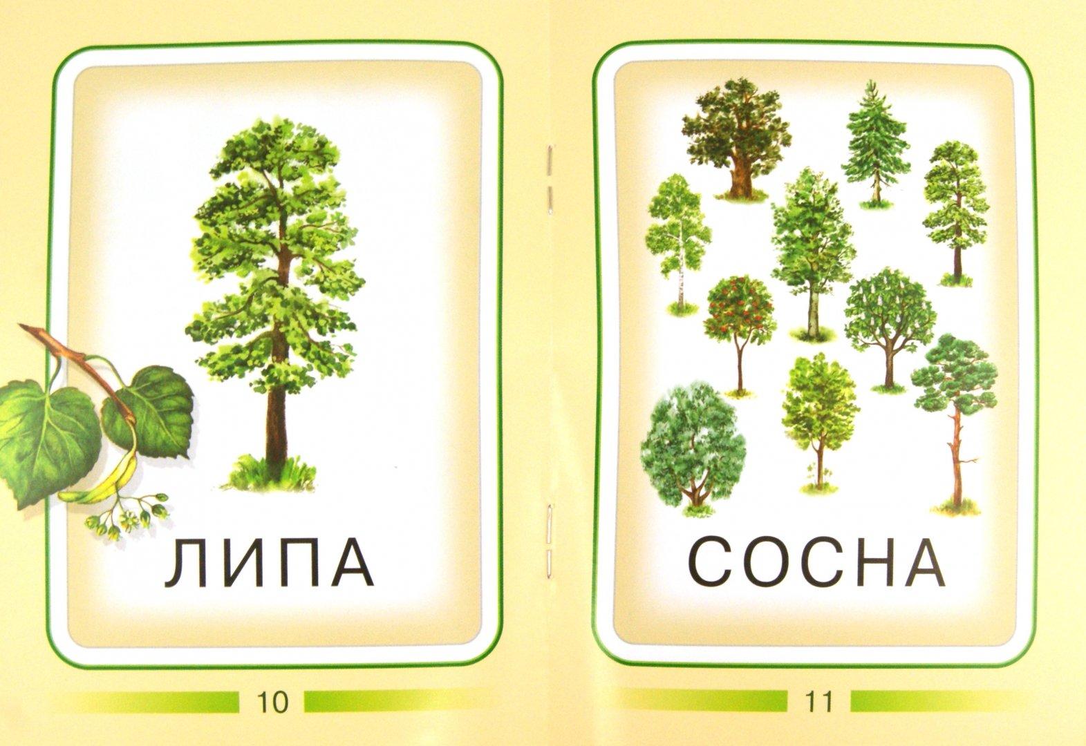 Иллюстрация 1 из 7 для Деревья | Лабиринт - книги. Источник: Лабиринт