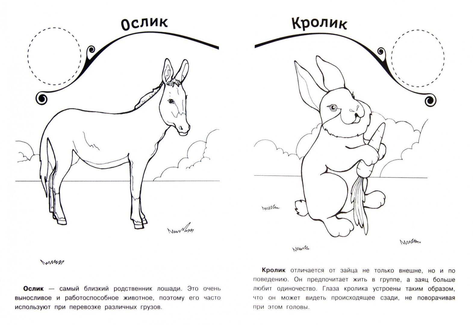 Иллюстрация 1 из 5 для Веселая ферма | Лабиринт - книги. Источник: Лабиринт