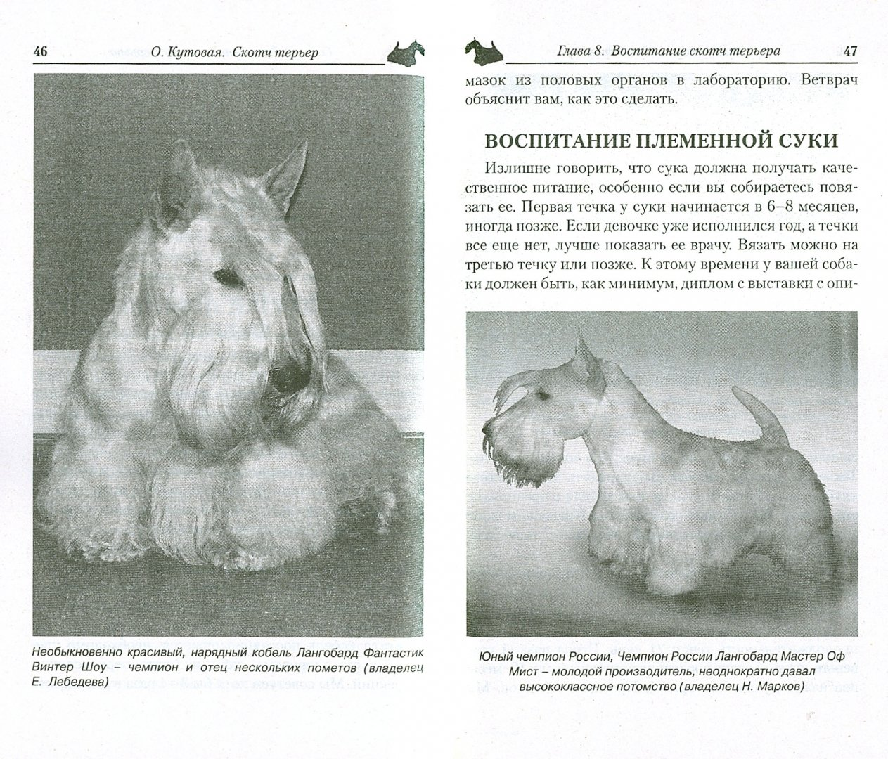 Иллюстрация 1 из 28 для Скотч терьер. Маленький джентльмен - Ольгп Кутовая | Лабиринт - книги. Источник: Лабиринт