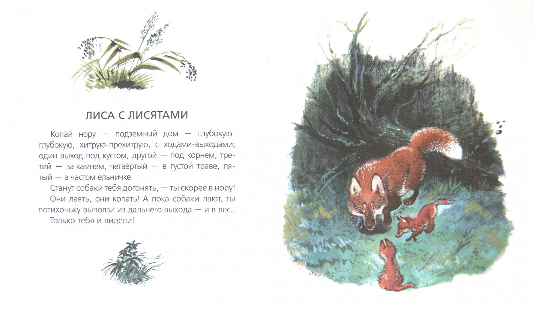 Чарушин рассказы для детей в картинках