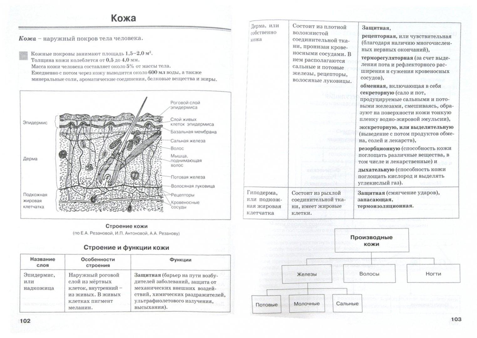 Иллюстрация 1 из 28 для Биология человека в таблицах и схемах. Человек и его здоровье - Наталия Бодрова   Лабиринт - книги. Источник: Лабиринт