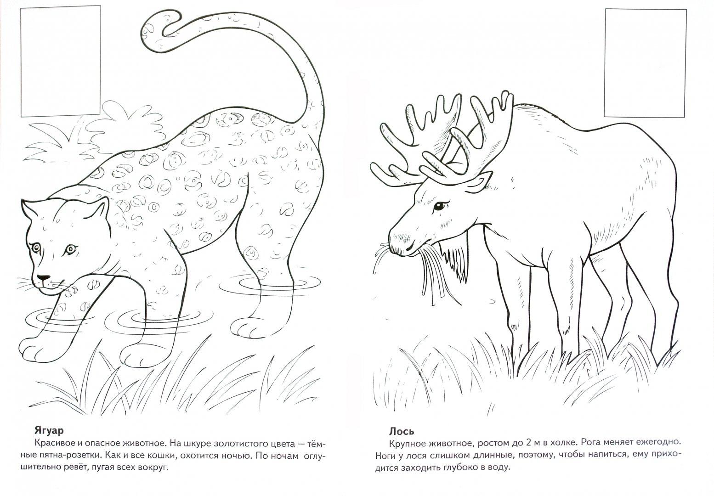 Рисунки животных которые занесены в красную книгу россии выбрать