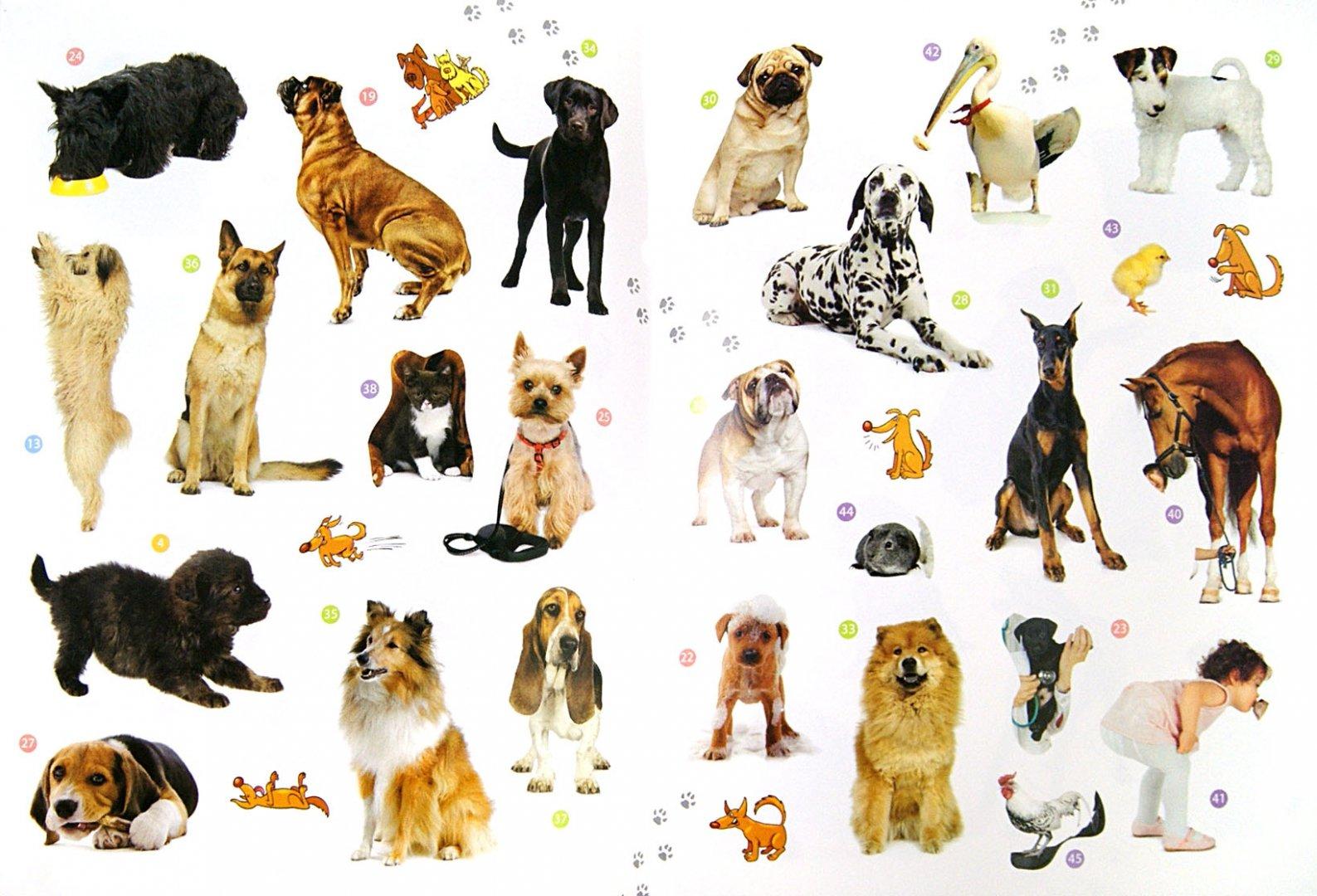 Породы собаки кошек в картинках с названиями
