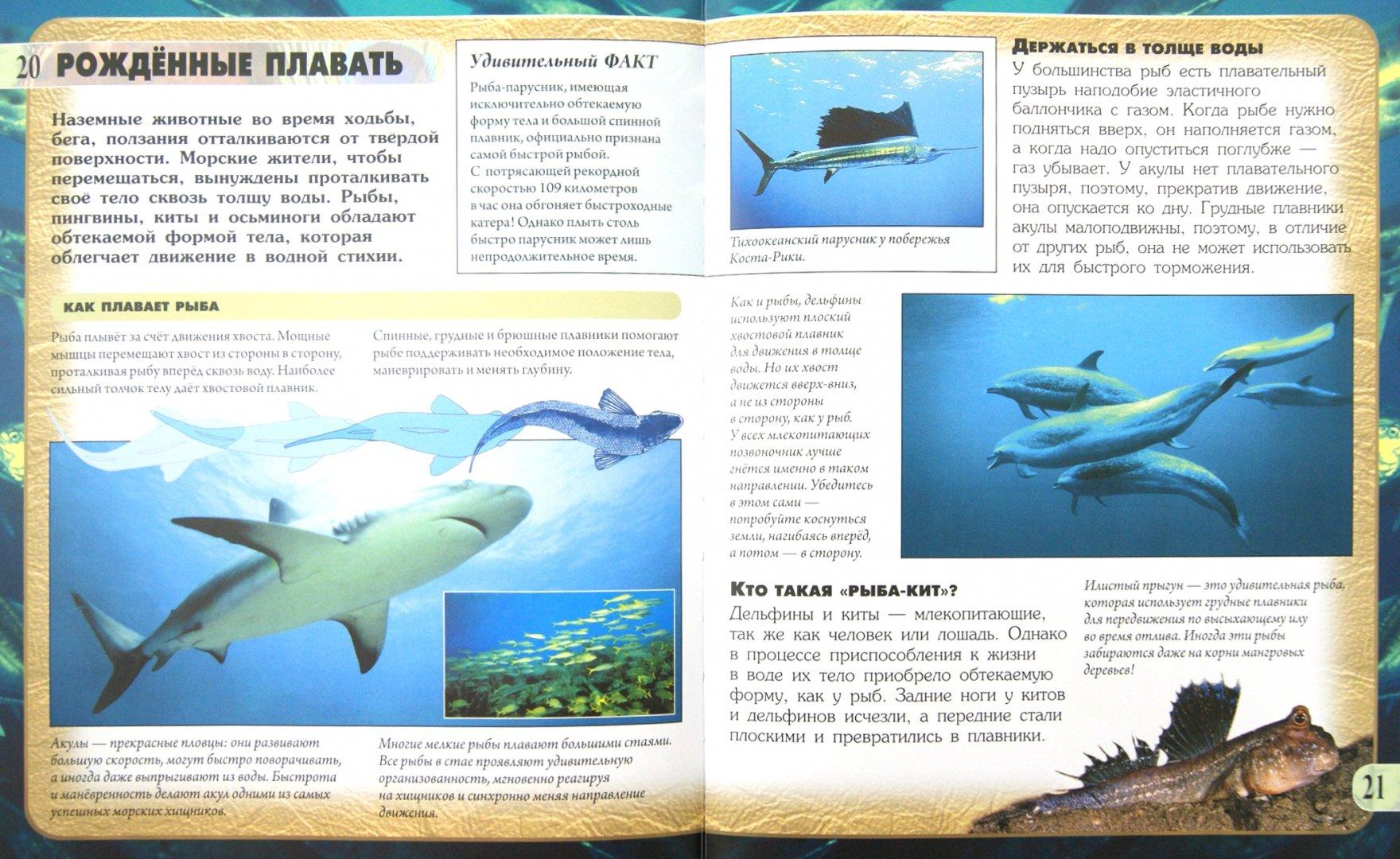 Иллюстрация 1 из 9 для Передвижение животных - Кейт Петти | Лабиринт - книги. Источник: Лабиринт