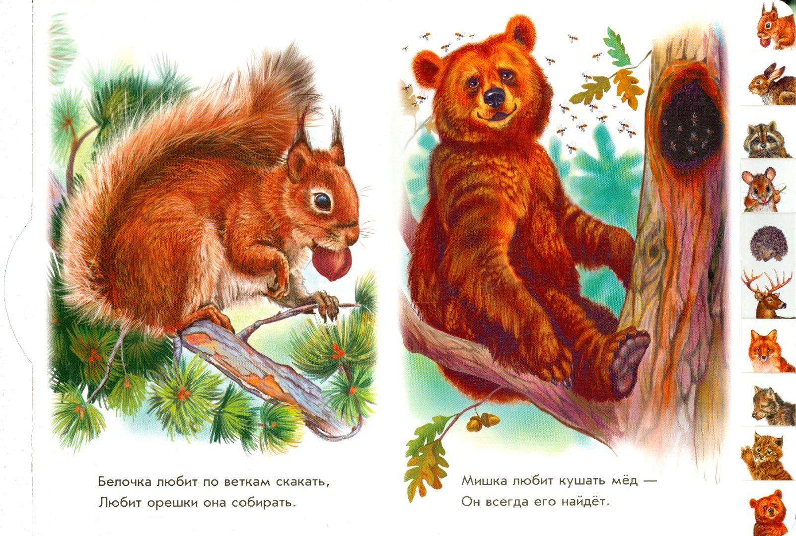 Иллюстрация 1 из 21 для В лесу - Олеся Квитка | Лабиринт - книги. Источник: Лабиринт