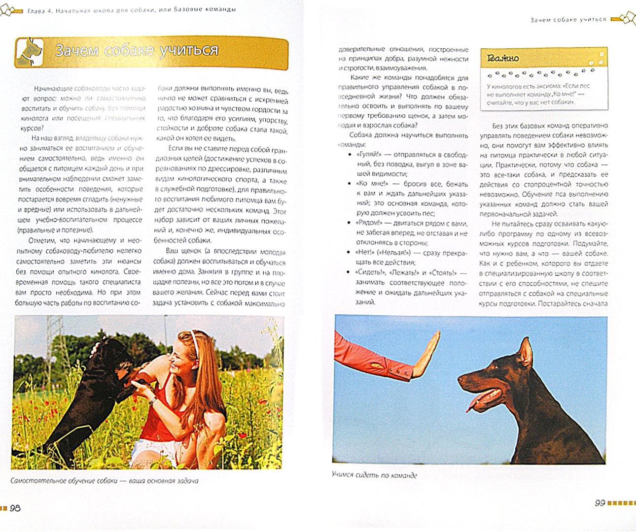 Иллюстрация 1 из 15 для Дрессировка и воспитание собаки (+DVD) - Андрей Шкляев   Лабиринт - книги. Источник: Лабиринт