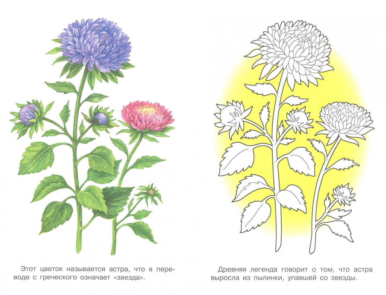 """Иллюстрация 1 из 33 для Раскраска """"Садовые цветы ..."""