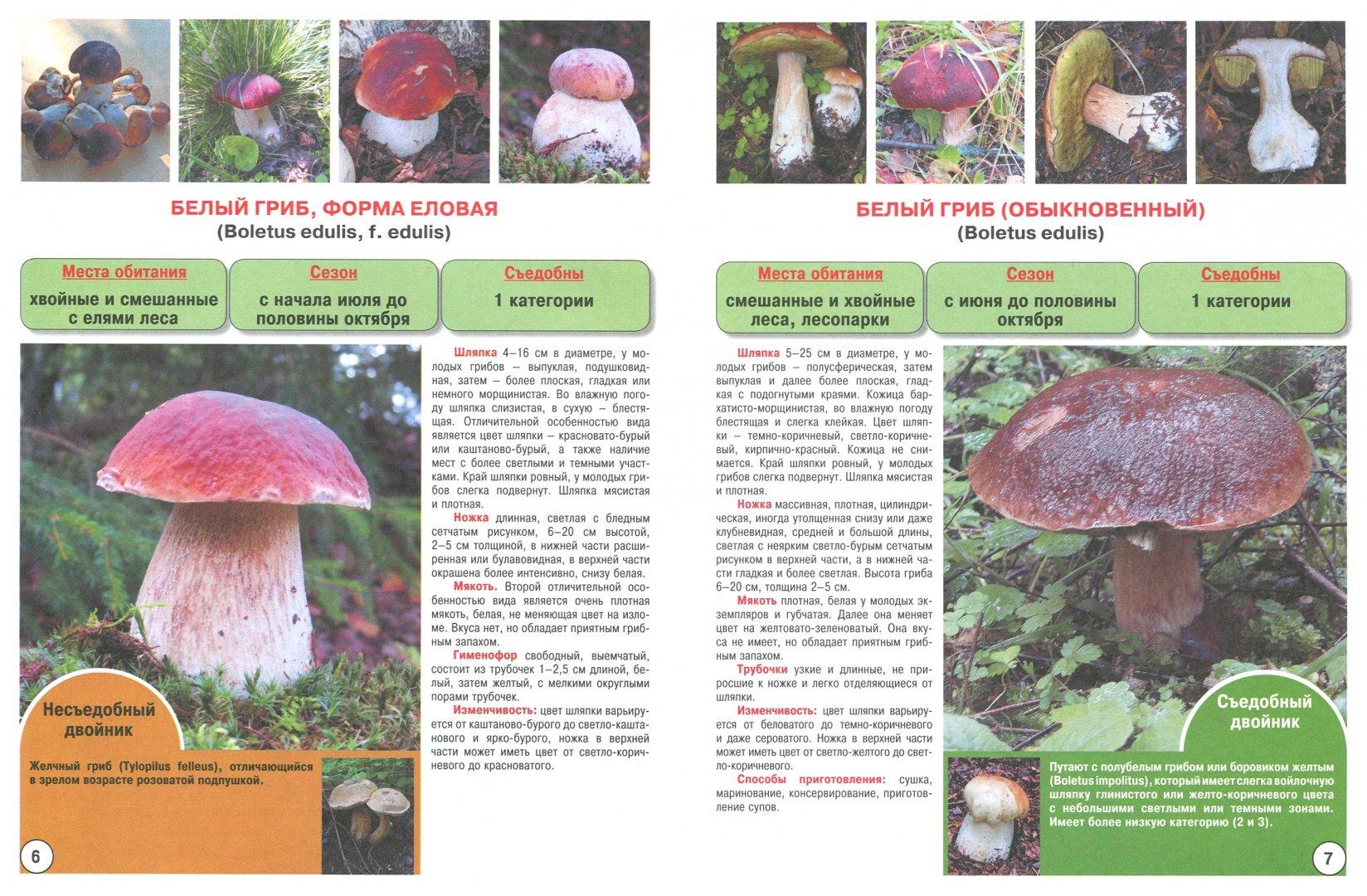 всего грибы с картинками фото грибов с названиями описание информация фото