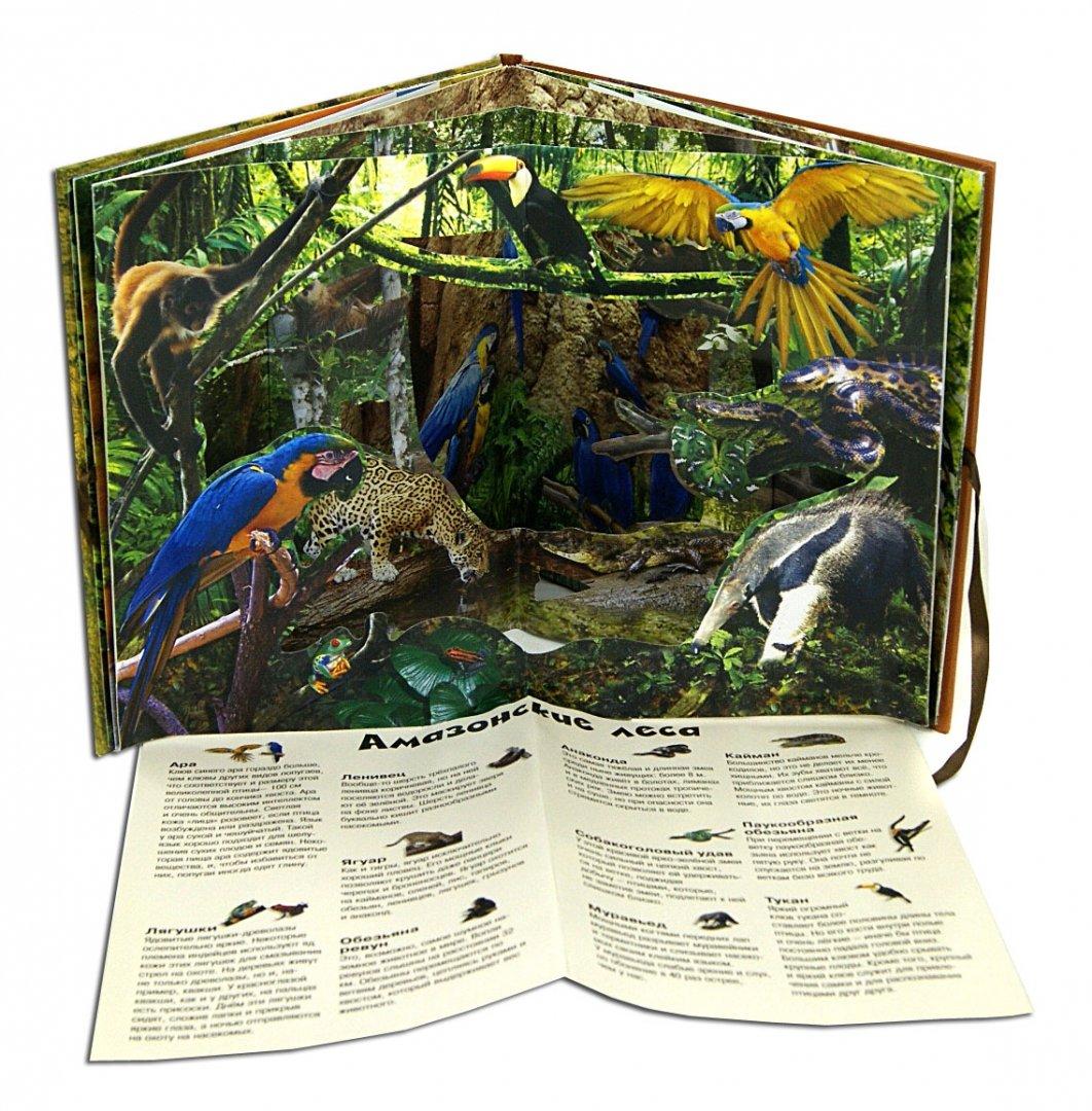 Иллюстрация 1 из 18 для Удивительные животные   Лабиринт - книги. Источник: Лабиринт